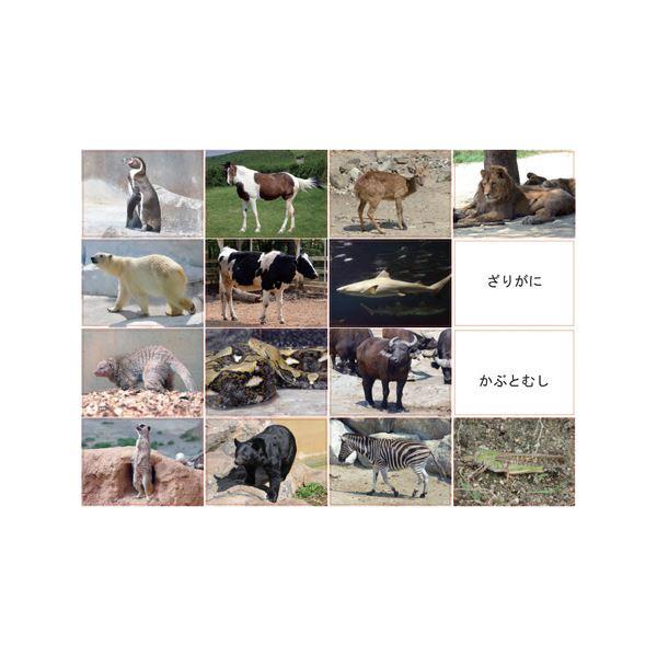 【送料無料】DLM 多目的言語カードセット動物編CD付KK0491