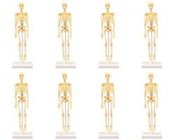 人体骨格模型 30cm学習セット(ケ-ス入) 03123593-001【03123593-001】[4521718936093]