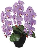 【送料無料・ポイント10倍】《アートグリーン》《人工観葉植物》光触媒 光の楽園 胡蝶蘭セリースL