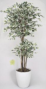 新品?正規品  【送料無料・ポイント10倍】《アートグリーン》《人工観葉植物》光触媒 光の楽園 トロピカルベンジャミン斑入り 1.6:JUSTJAPAN-花・観葉植物