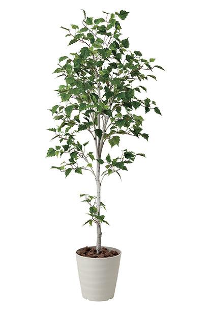 【送料無料・ポイント10倍】《アートグリーン》《人工観葉植物》光触媒 光の楽園 白樺シングル1.8