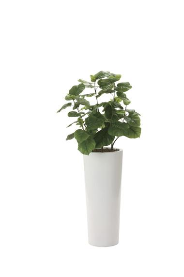 【送料無料・ポイント10倍】《アートグリーン》《人工観葉植物》光触媒 光の楽園 ウンベラータ1.4