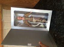ホビー Christian Dior Barbie バービー Special Mattel