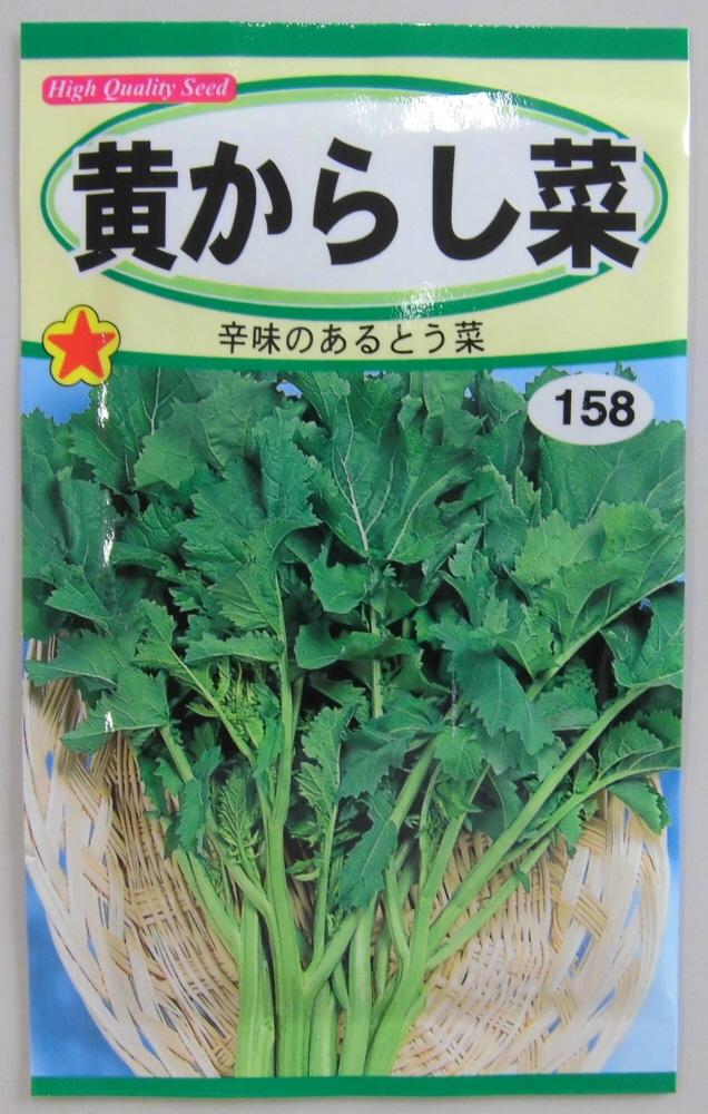 野菜種 特価品コーナー☆ 流行のアイテム 黄からし菜種辛味のあるとう菜丈夫で作りやすい トーホク