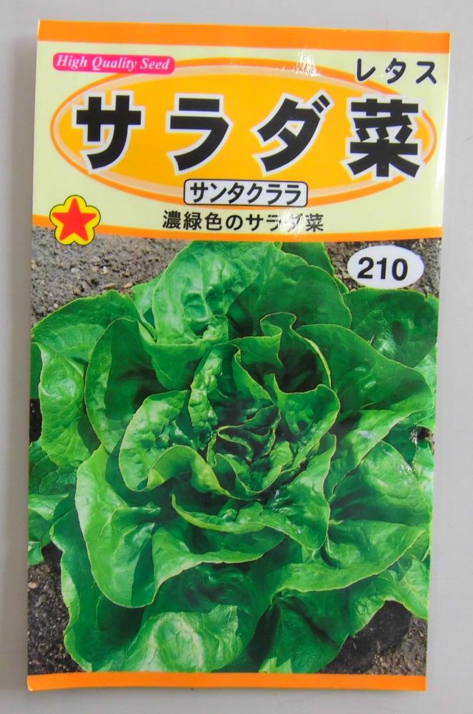 野菜種 レタス種サラダ菜 サンタクララ ◆セール特価品◆ トーホク 安い 春 秋蒔きで作りやすい