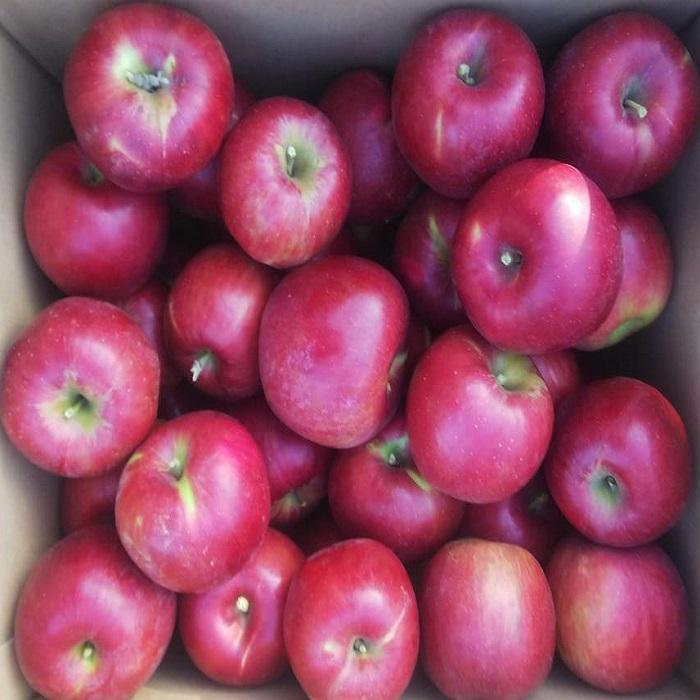 予約商品 9月下旬から順次発送いたします りんご 訳あり 訳ありセール 格安 紅玉 山形県 ☆正規品新品未使用品 サイズいろいろ フルーツ 30~50個程度 山形 わけあり 果物 10kg