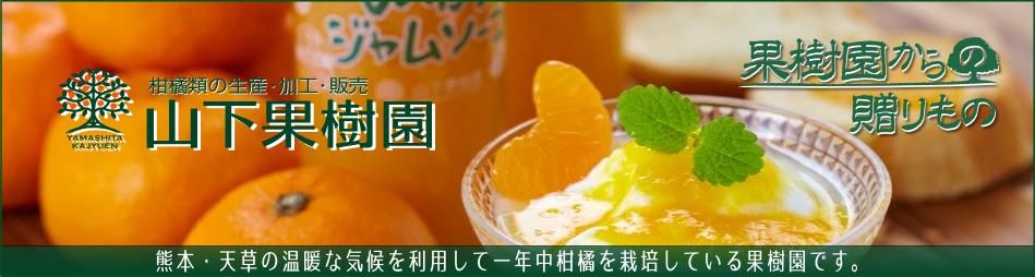 山下果樹園:山下果樹園は熊本、天草でみかんの栽培を40年以上行っています。