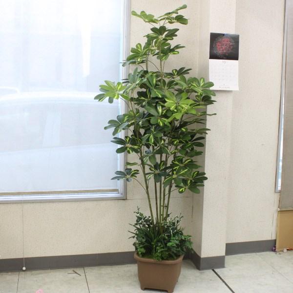 人工観葉植物 大型 カポックツリー 180cm TB938 造花 フェイクグリーン CT触媒 snb