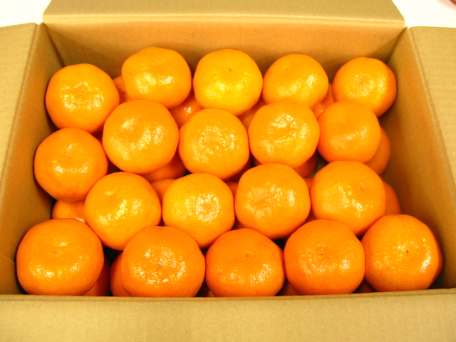 みかん 蜜柑 ミカン 果物甘くておいしいみかんSサイズ10キロ入り【楽ギフ_包装選択】【楽ギフ_メッセ入力】あす楽