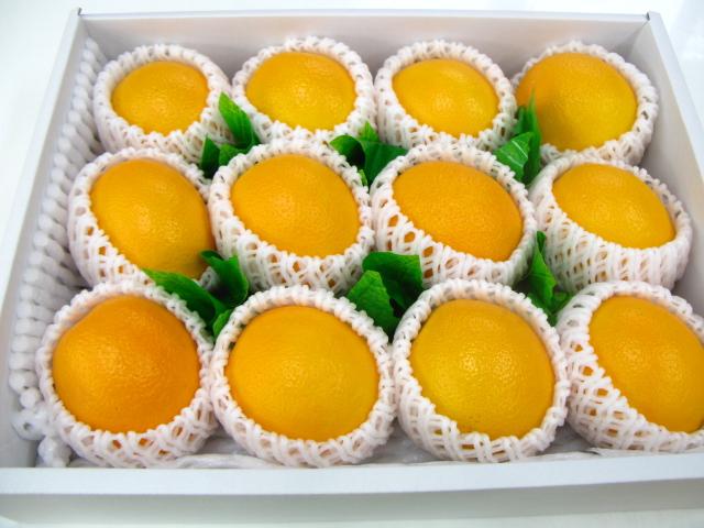 お歳暮 果汁たっぷり 甘くて美味しい オレンジ12個入り 限定特価 楽ギフ_包装選択 楽ギフ_メッセ入力