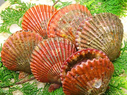 バーベキューには欠かせません 定番 焼くだけで貝の甘味が旨味が一杯味わえる貝 新入荷 流行 濃厚な味と甘味が特徴 伊勢志摩の貝です あっぱっぱ貝
