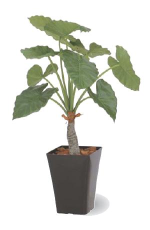 タカショー グリーンデコ鉢付 観葉植物「クワズイモ」0.9m