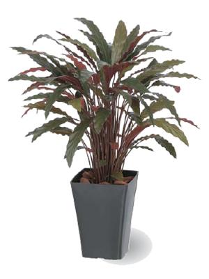 タカショー グリーンデコ鉢付 観葉植物「カラテアRレッド」0.9m