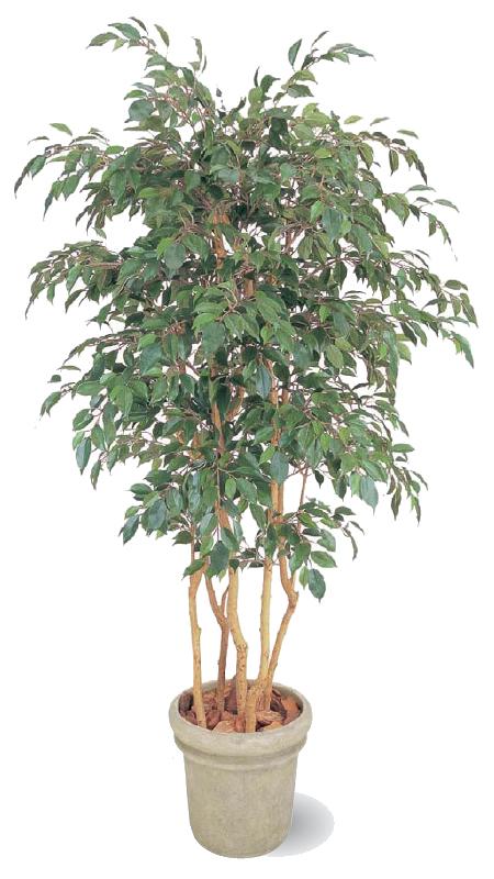 タカショー グリーンデコ鉢付 観葉植物「ベンジャミン 立木 5本立」1.8m