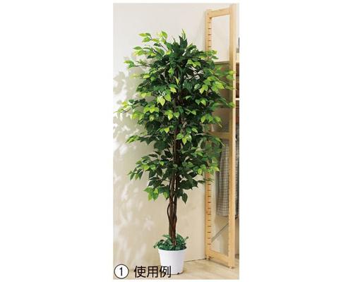 人工観葉植物 ベンジャミン 立ち木 グリーン(H210cm)1台