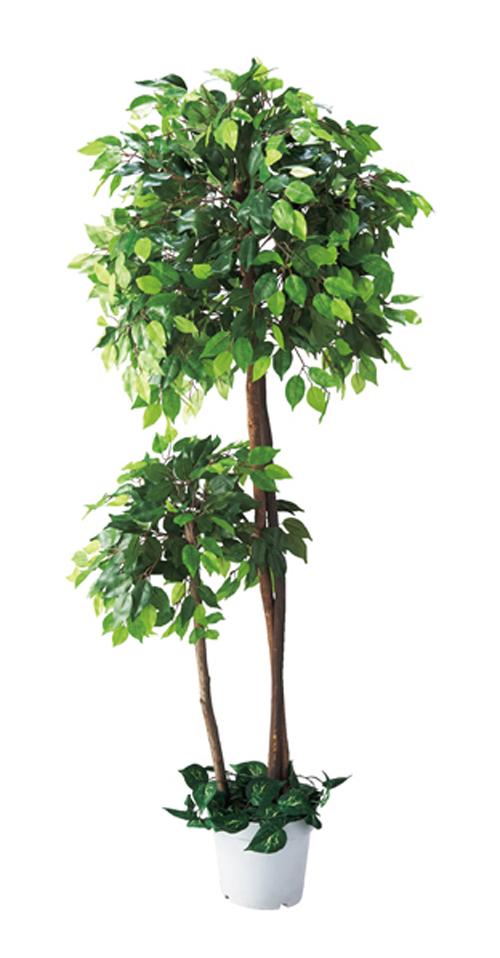 人工樹木 ベンジャミンダブル(H180cm) 1台 立ち木 人工観葉植物