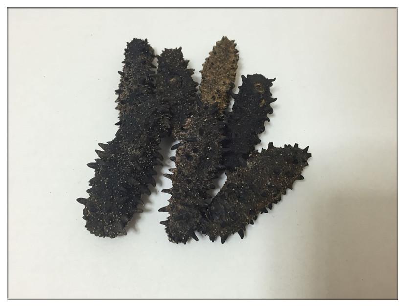 【北海道産】B級品 200g SMサイズ3~8g【自家用訳あり品、キズあり、形崩】ナマコ・乾燥なまこ・乾燥ナマコ・干しナマコ・干しなまこ・金ん子・海鼠