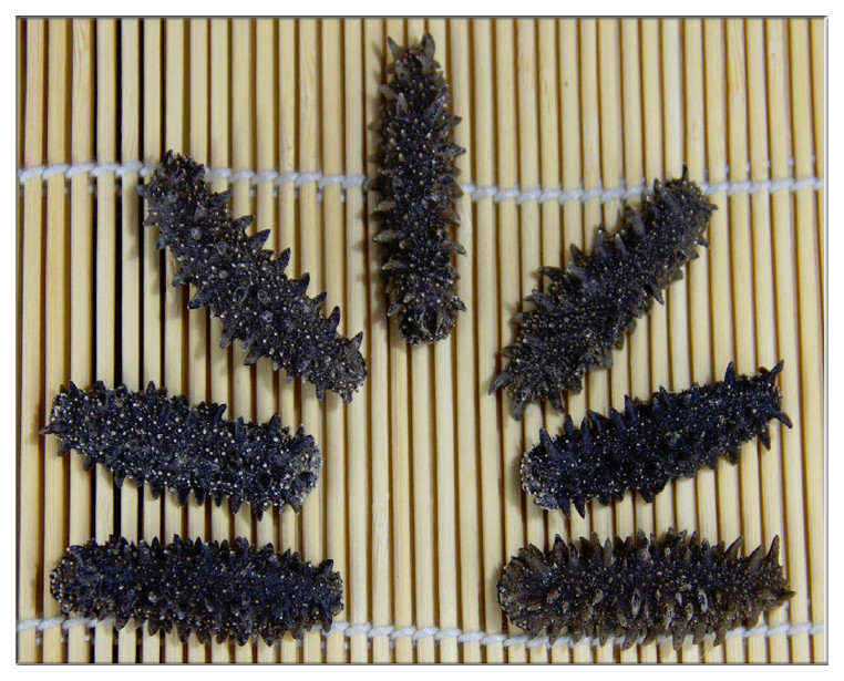 【北海道産】AB級品 1KG SMサイズ3~8g【ナマコ・乾燥なまこ・乾燥ナマコ・干しナマコ・干しなまこ・金ん子・海鼠 】