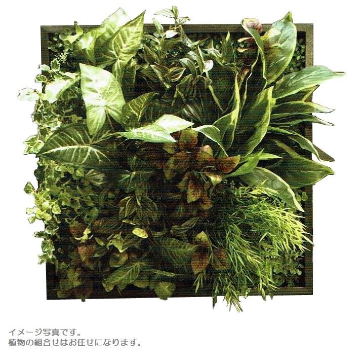【人工観葉植物】アーティフィシャルグリーンアレンジ壁面植裁 □53cm rg-019 インテリア 造花