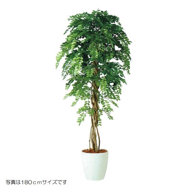 人工観葉植物 アカシアリアナ150 高さ150cm dt98985 (代引き不可) インテリアグリーン 造花