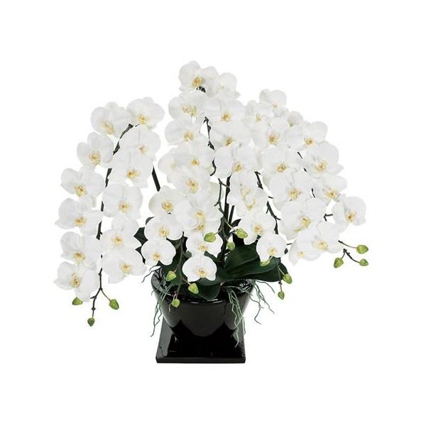 人工観葉植物 ピュアオーキッド5本立(ファレノジュリアーノ)ホワイト 光触媒加工 高さ80cm zv7000 (代引き不可) インテリアグリーン 造花