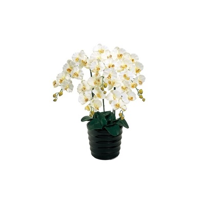 人工観葉植物 ピュアオーキッド5本立(ファレノ)クリームホワイト 光触媒加工 高さ72cm zv6500b (代引き不可) インテリアグリーン 造花