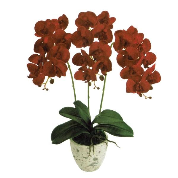 人工観葉植物 ピュアオーキッド3本立(フローラファレノ)レッド 光触媒加工 高さ50cm zv8080 (代引き不可) インテリアグリーン 造花