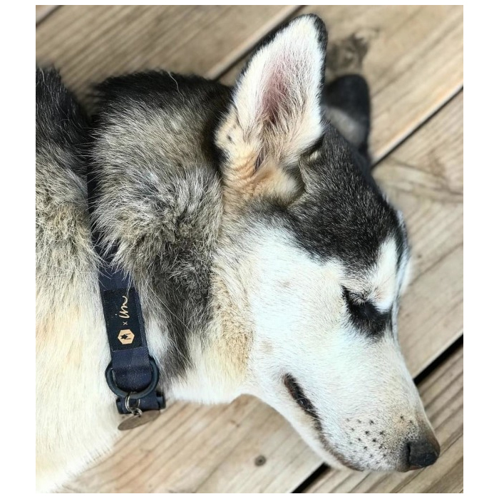 ウルフギャング(WOLF GANG MAN & BEAST)犬用リードペットDOG LEASH/DarkCamo-M 中型犬 パグ/コッカスパニエルシュナウザーボストンテリアフレンチブルドッグオーストラリアン・キャトル・ドッグスタッフォードシャー・ブル・テリアブリタニーサルーキビーグル柴犬