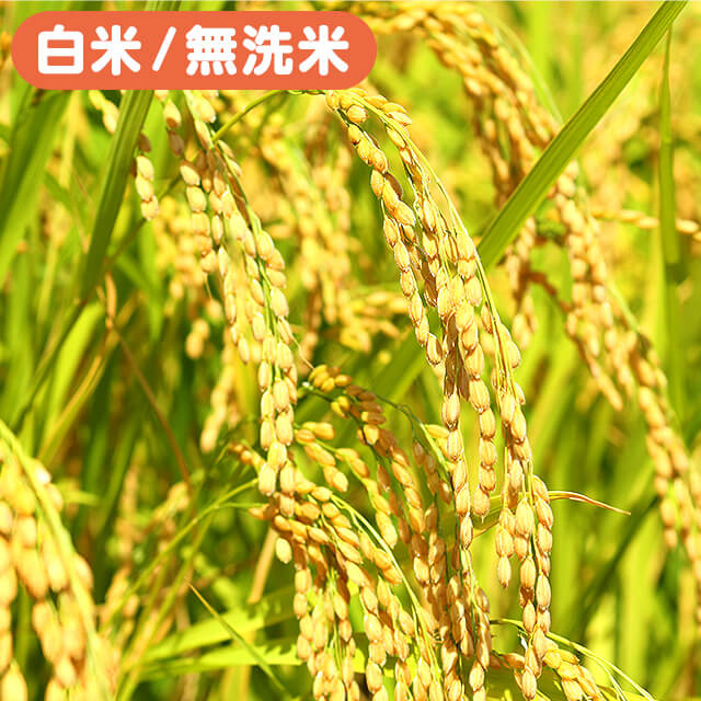 【10kg×12回継続注文】<令和元年産>田辺さん家の新潟県産コシヒカリ100%10kg×12ヶ月(rice19-10kg-12m)※白米・無洗米選べます。※有機質肥料・低減農薬【頑張って送料無料!】