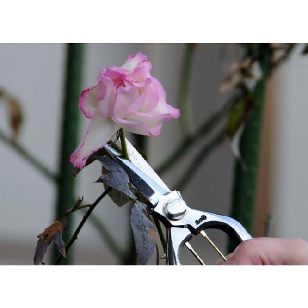 【smtb-TK】【頑張って送料無料!】花つくり 花切鋏 200mm バラの硬い茎も楽に切れます。