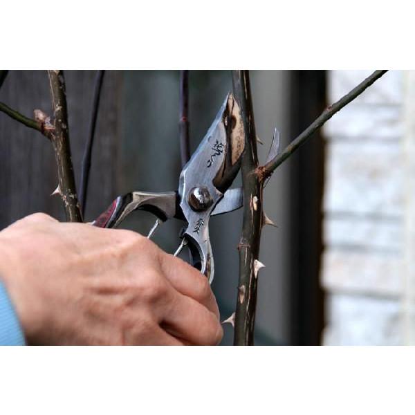 【smtb-TK】【頑張って送料無料!】花つくり 剪定鋏 200mm バラの硬い茎も楽に切れます。