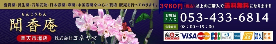 ヨネヤマ 聞香庵 楽天市場店:長生蘭・石斛花物・富貴蘭・日本春蘭・中国春蘭・日本寒蘭を扱っております
