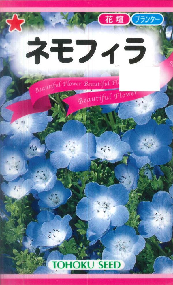 鮮やかな青色 チューリップとの相性も抜群 トーホク ネモフィラ 秋まき ハイクオリティ 高品質 耐寒性一年草 0.6ml