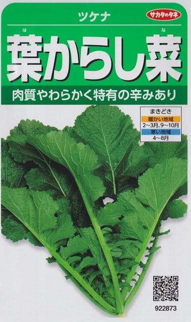 トラスト 肉質やわらかく独特の辛みあり 寒さにも強い ツケナ 葉からし菜 サカタのタネ 野菜種 マート 922873 秋まき 春まき 10ml