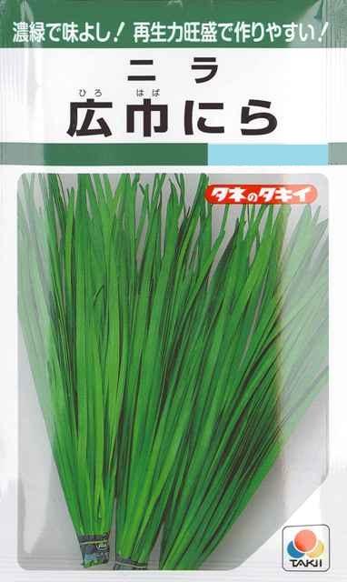 注目ブランド 濃緑で味よし 再生力旺盛で作りやすい ニラ 広巾にら タキイ種苗 秋まき 15ml 野菜種 春まき 人気 おすすめ