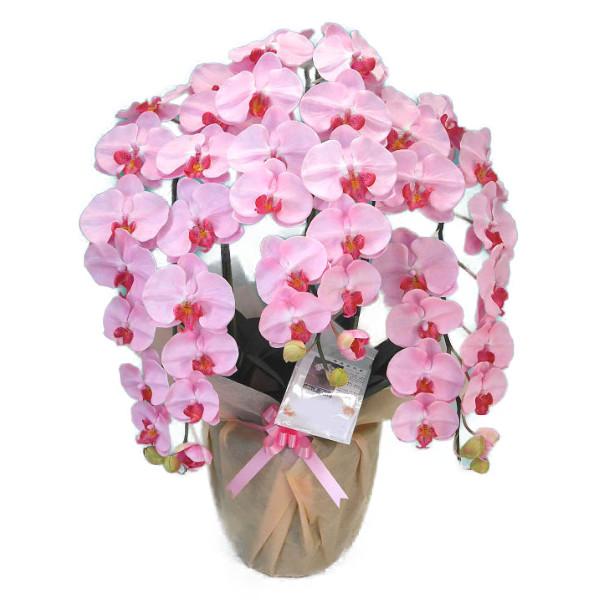 造花 光触媒 胡蝶蘭 大輪 特大 薄ピンク 3本立ち
