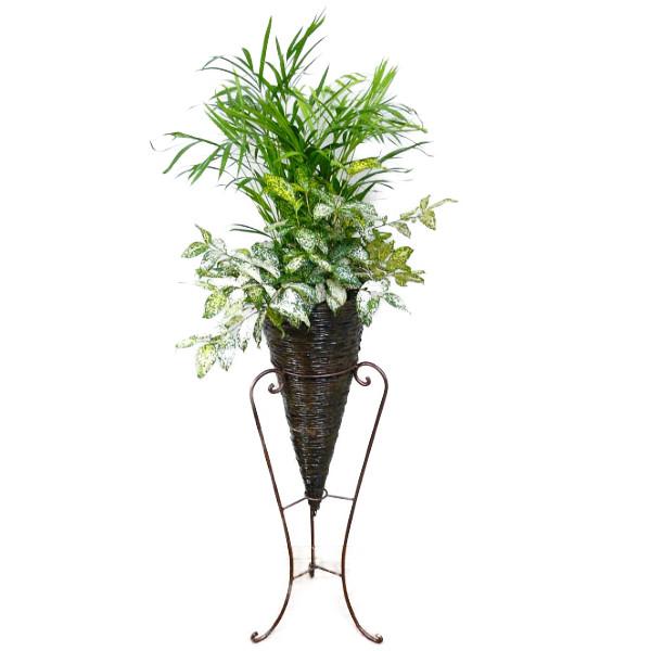 【個人宛配送不可】 観葉植物 スタンドM 2種寄せ植え 【送料無料】