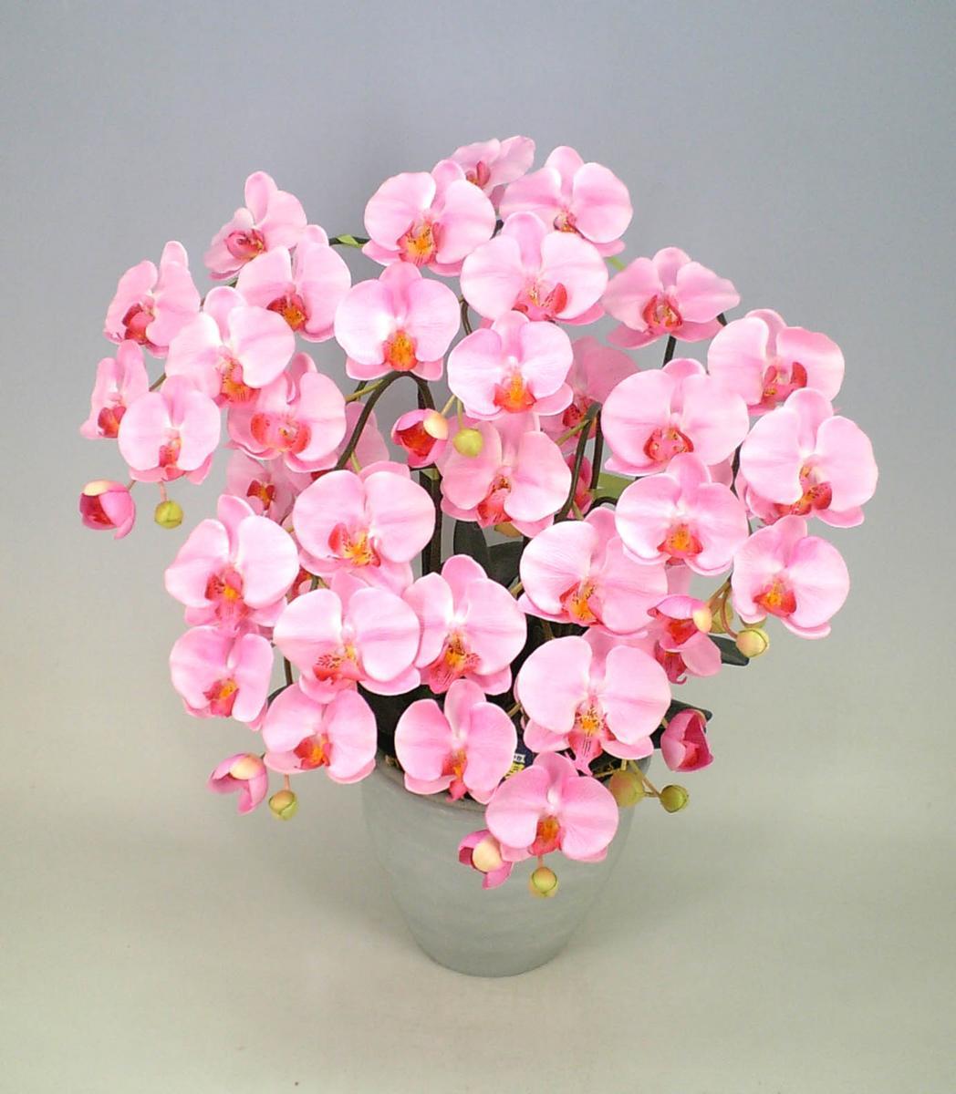 Yoran rakuten global market phalaenopsis orchid flower light pink phalaenopsis orchid flower light pink 5 stand mightylinksfo