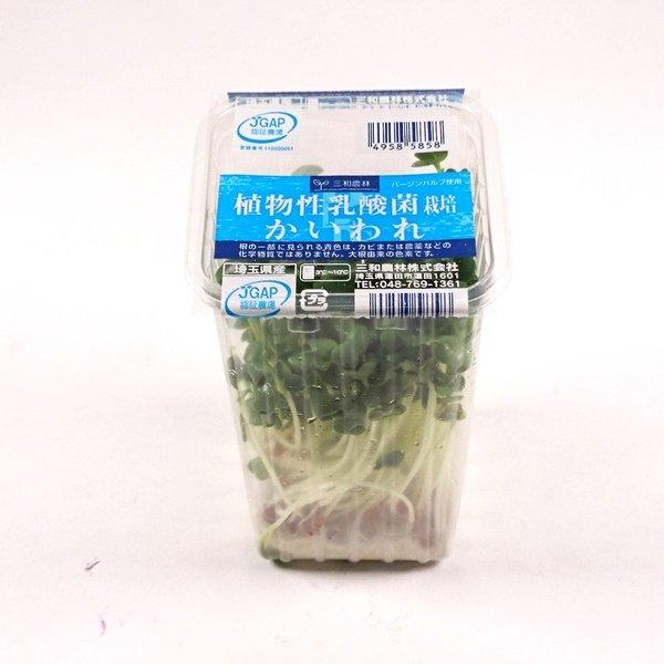 春の新作 9月18日はかいわれの日 卸売り 植物性乳酸菌栽培かいわれ