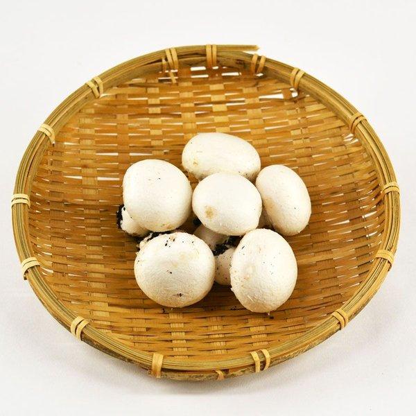 生で食べられる唯一のキノコ ホワイトマッシュルーム 情熱セール おトク