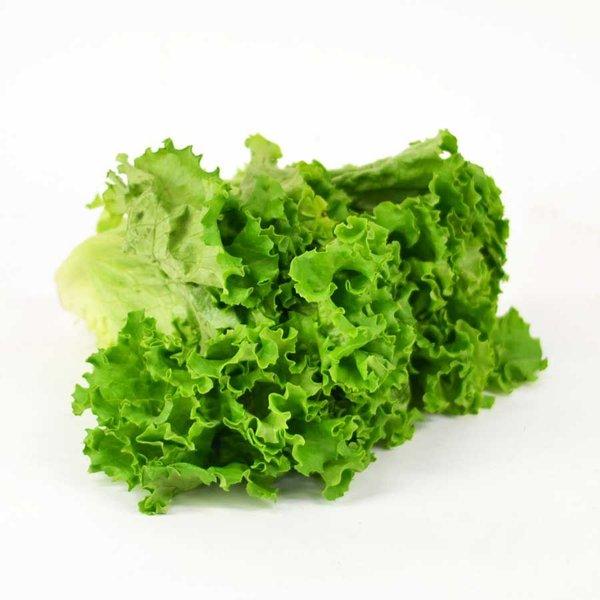 カールした葉が使いやすい グリーンカール 正規認証品!新規格 グリーンリーフ 発売モデル