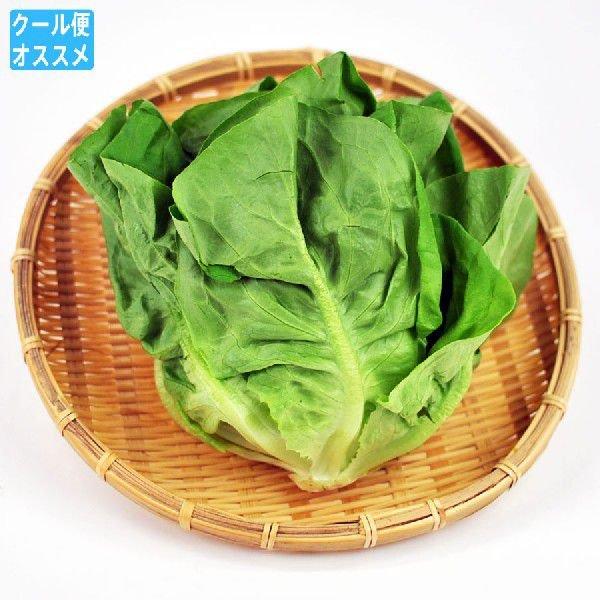 直輸入品激安 新作製品、世界最高品質人気! 柔らかくサラダや包み菜に最適 サラダ菜