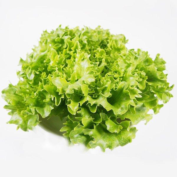 根元を切るだけで葉がバラバラに ◇限定Special Price サラノバ グリーンクリスピー フリル 受賞店