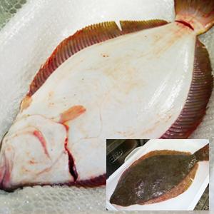 魚屋の目利きが厳選!天然ヒラメ【楽ギフ_のし】(約2kg)【北海道・九州・沖縄・離島はお届け不可】