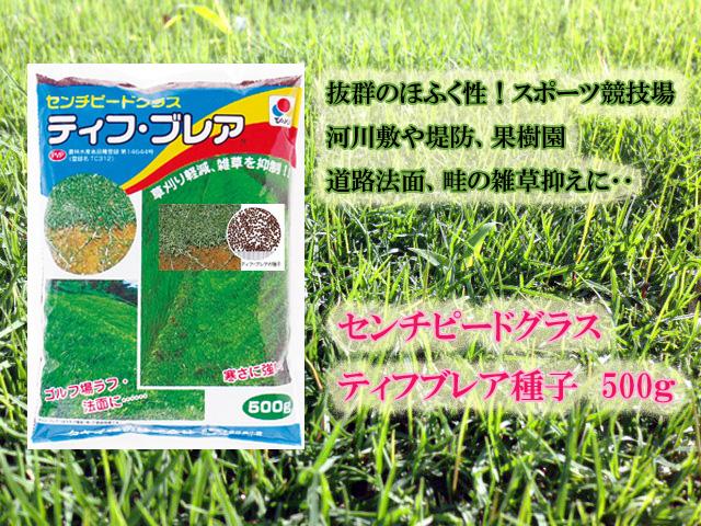 芝種 センチピードグラス・ティフ・ブレア 1袋(0.5kg) 【タキイ種苗】