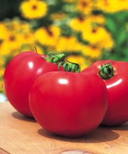 【送料無料】桃太郎ファイト 大玉トマト種子 1000粒 【トマト種】【タキイのタネ】【野菜の種】