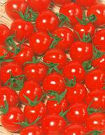 キャロル10 ミニトマト 1000粒 【トマト種】【タキイのタネ】【野菜の種】