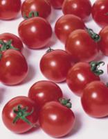 【郵便送料無料】キャロルスター ミニトマト 1000粒 【トマト種】【タキイのタネ】【野菜の種】