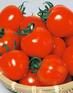 【郵便送料無料】シンディースイート 中玉トマト 1000粒 【トマト種】【サカタのタネ】【野菜の種】