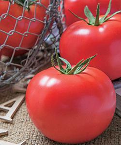 【送料無料】桃太郎ホープ 大玉トマト種子 1000粒 【トマト種】【タキイのタネ】【野菜の種】